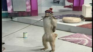 Street Entertainer - Monkey / Goat | Life Skills TV thumbnail