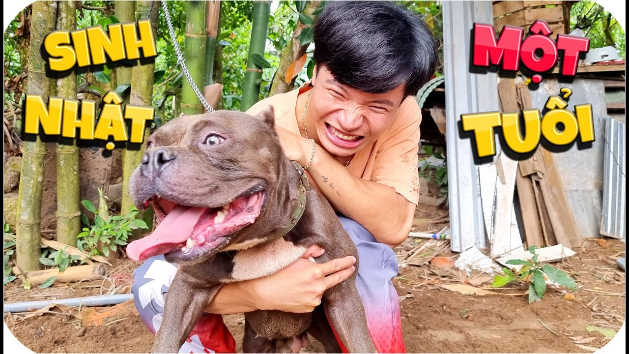 Tony | 24h Nuôi Chó Dữ - Vlog #2