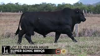 Lot 32 - Telpara Hills SUPER SONIC  889Q5