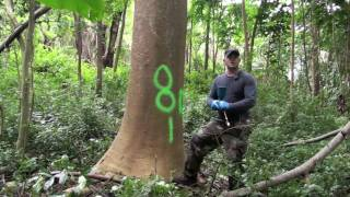 Injection Methods for Controlling Albizia