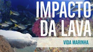 Lava do vulcão Cumbre Vieja chega ao mar de La Palma e impacta a vida marinha das Ilhas Canárias