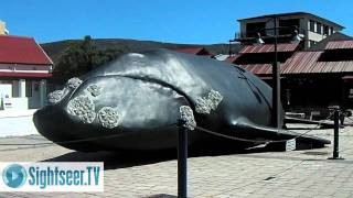 Safari South Africa - Best wildlife locations in and around Cape Town
