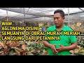 Lelang Obral Aglonema Harga Termurah Langsung Dari Petaninya  Mp3 - Mp4 Download
