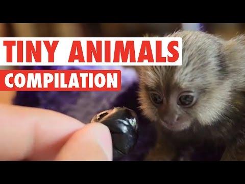 Cute Tiny Animals Pet Video Compilation 2016