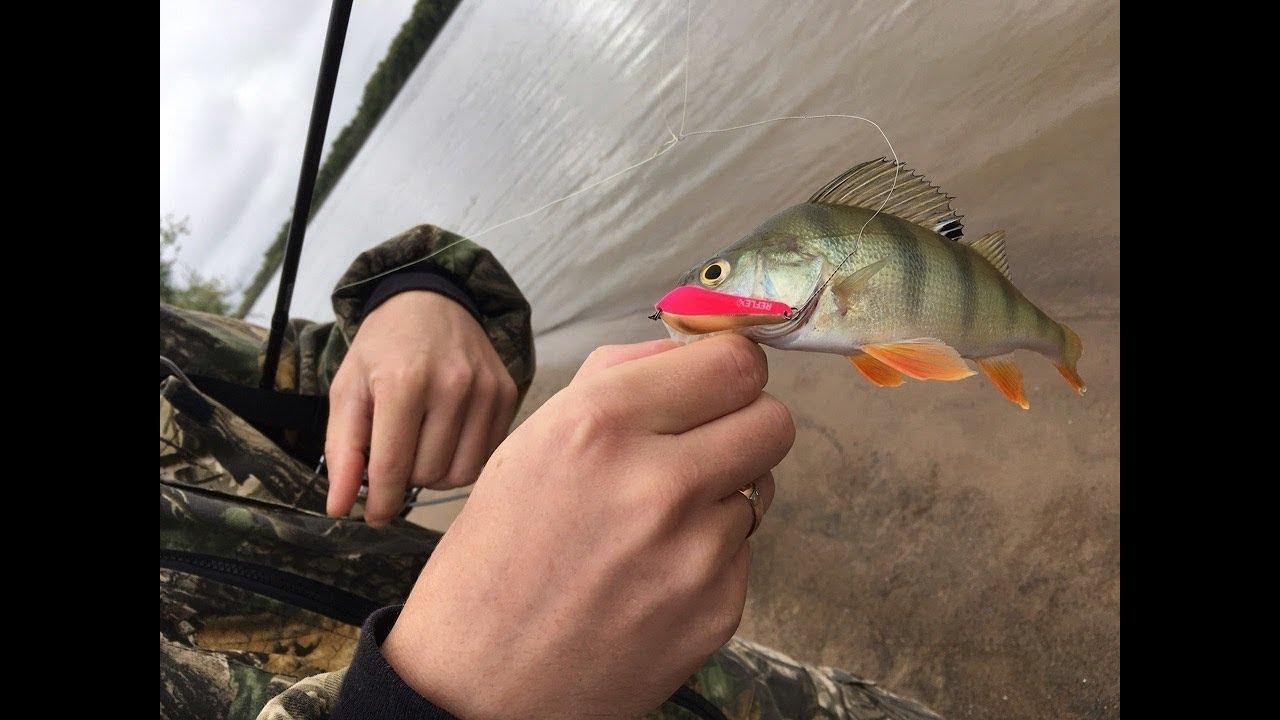 Рыбалка на реке Иртыш Омской области — обзор и отзывы