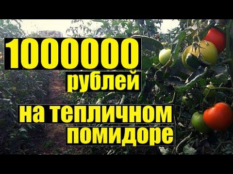 Как заработать МИЛЛИОН рублей на помидоре в теплице?