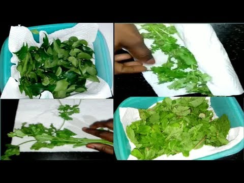 How to Clean and Store Greens in Fridge || Curry Leaves, Coriander and Mint Leaves