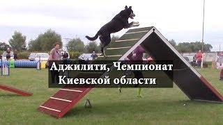 Аджилити, Чемпионат Киевской области