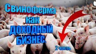 Свиноферма как бизнес.Доход от 400 тыс/мес. Бизнес идея. Часть 2