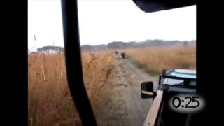 Animals Chasing Cars