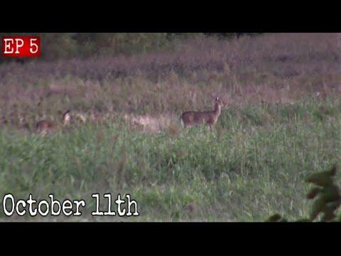 Oklahoma Public Land Bow Hunting October 11th 2019 Deer Hunting 2019
