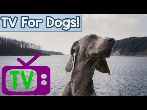Virtual Wildlife Movie for Dogs! Take Your Dog on a Virtual Nature Adventure with Dogs, Sheep, Water