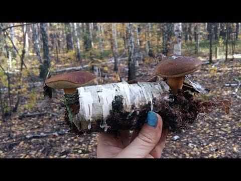 Лесные осенние грибы