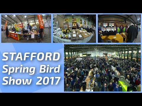 FOR SALE! GUACAMAYO, COCKTAIL AGAPORNIS & BIRDS ✔ BEST PRICES  Stafford Spring Bird Show