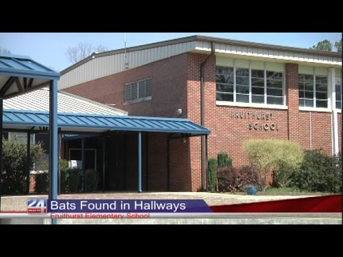 Bats in the Halls of Fruithurst Elementary School