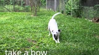 Novice Trick Dog Class Promo 1