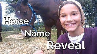 Horse Name Reveal / My Morning Horse Routine / Training / Saddling