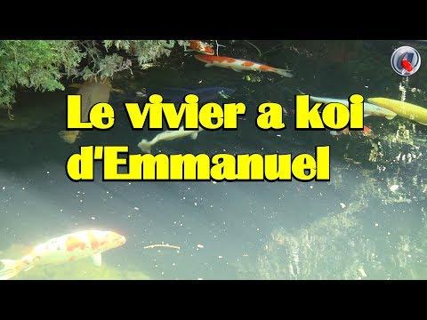 Le vivier a koi d'Emmanuel