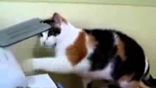 Los gatos más graciosos del mundo. Videos de animales divertidos y tontos. Mascotas para reirse.