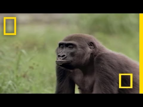 Monkey Tries to Mate With Deer (Rare Interspecies Behavior) | National Geographic from YouTube · Duration:  1 minutes 21 seconds