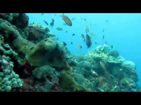 Fish Collectors Bali