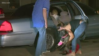 Dog shot trying to protect family during home invasion, police say