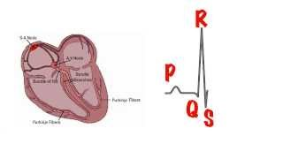 The basics of the ECG in 5 min