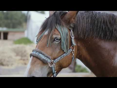 """Сялянска-фермерская гаспадарка """"Green Ranch"""". Частка 3: Коні, што не сталі каўбасой"""