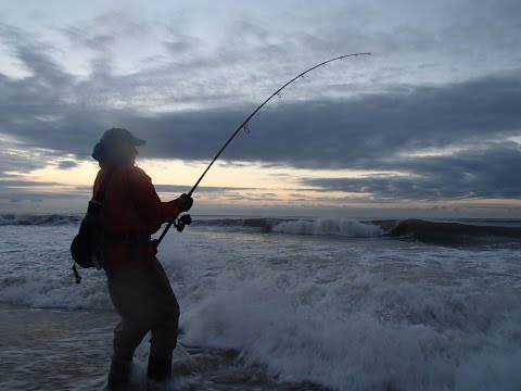 Surf Fishing with first beach buggies at Montauk Point, NY
