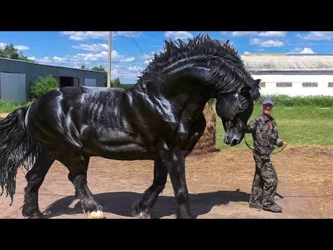 10 Самых больших лошадей в мире