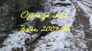Охота за лосем. Зима, 2009 год.