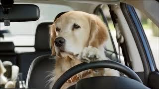 Funny commercial Dog Subaru