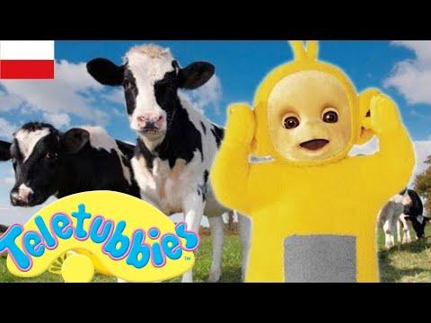 Teletubis po polsku - kompilacja 1 godziny | DOBRA JAKOŚĆ (pełne odcinki) | Bajki dla dzieci