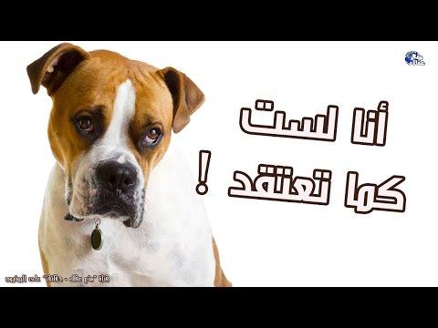 حقائق ومعلومات خاطئة عن الكلاب ! | أليك التصحيح الأن