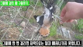 참새 그물에 걸려 죽음을 기다리던 예쁜 새 구출하기.