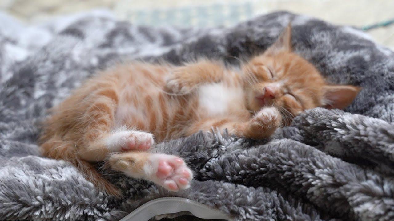 고양이를 잠들게 하는 마법