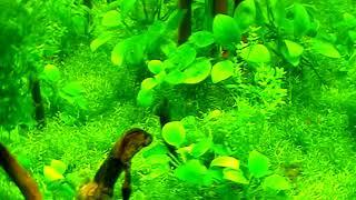 Aquascape. Mini aquarium