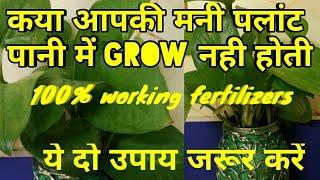 मनी पलांट100% grow होगी,बोतल में मनीपलांट की देखभाल कैसे करें,कया fertilizer दें
