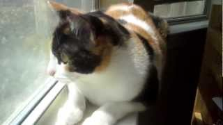 """Calico Cat """"Talking"""" to Some Birds"""