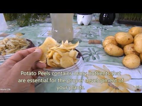 How to Make Organic Fertilizer at Home   Homedade Fertilizer   with Potato Peels
