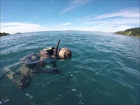 Marlborough Sounds Spearfishing | Robin Hood Bay
