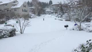 Snowmaggedon in Portland