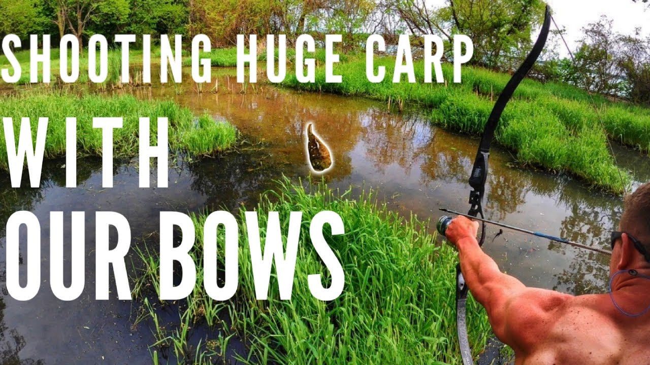 Shooting HUGE CARP in SHALLOW WATER | Bowmar Bowfishing |