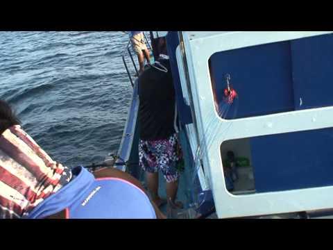 ปลาน้ำลึกกับรอกไฟฟ้า11มีค2556