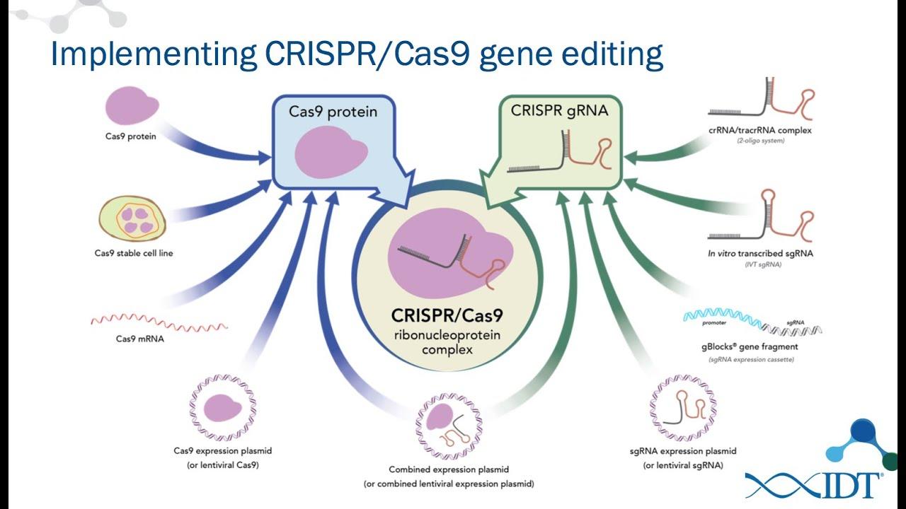 new rna tools for optimized crispr  cas9 genome editing