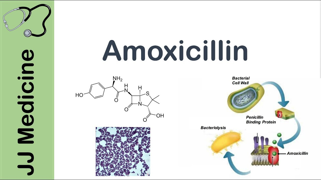 Amoxicillin | Bacterial Targets, Mechanism of Action, Adverse Effects |  Antibiotic Lesson