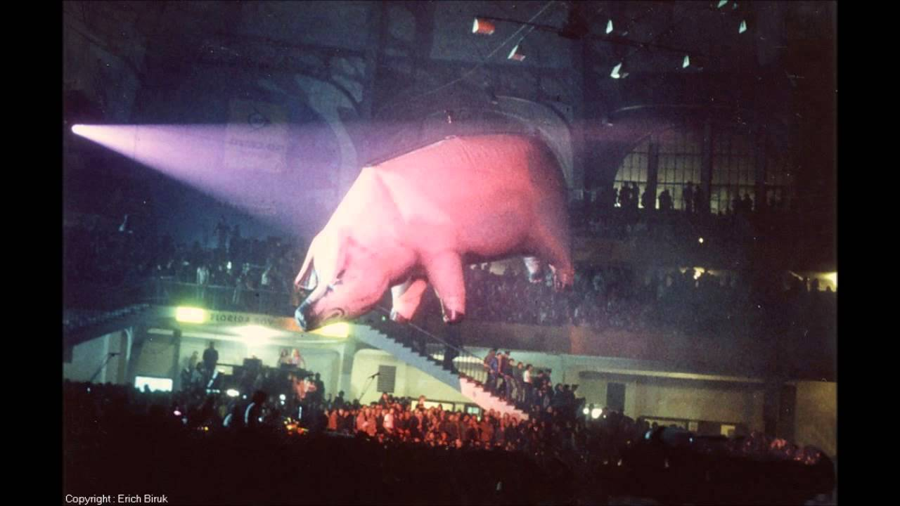 Pink Floyd Live Pigs Rowdy Cleveland Show Animals