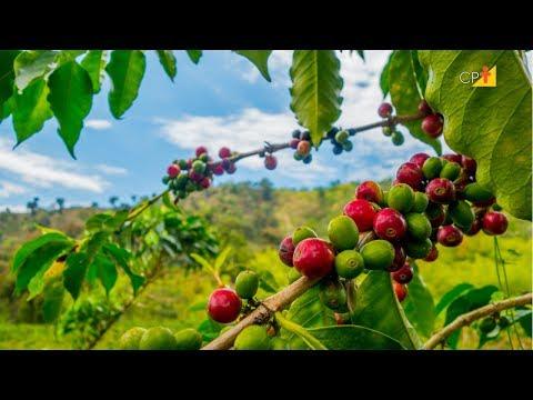 Clique e veja o vídeo Curso a Distância Construção e Operação de Terreiro-Secador de Café
