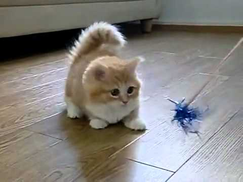 Thumbnail for Cat Video Fluffy Kitten Is Confused