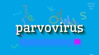 """How to say """"parvovirus""""! (High Quality Voices)"""